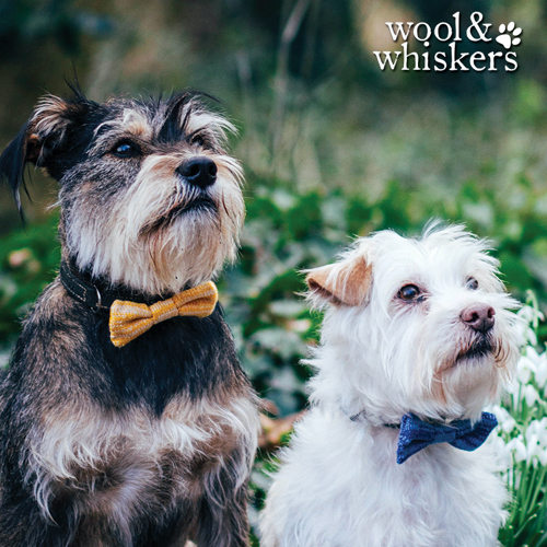 Wool & Whiskers